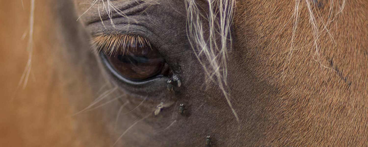 Horse - Health & Care - Fly Repellents