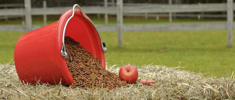Horse feed supplies, balancers, fibre feeds, copra meal
