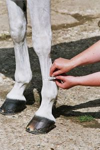 Where to Measure your Horse