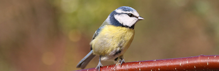 Tempt wild birds to your garden with our excellent range of wild bird seed, fat balls and suet
